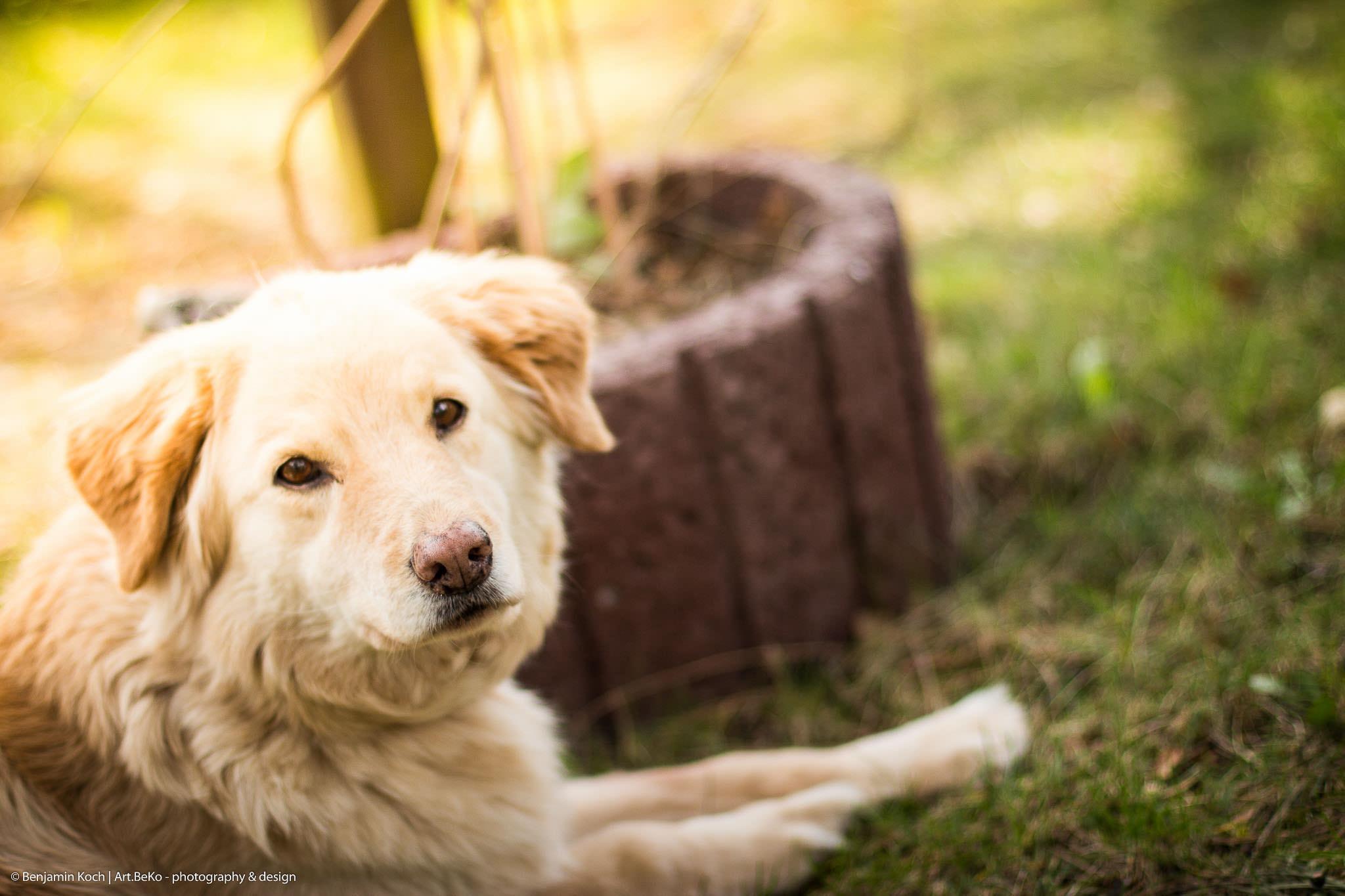 Fotografie Portrait Hund